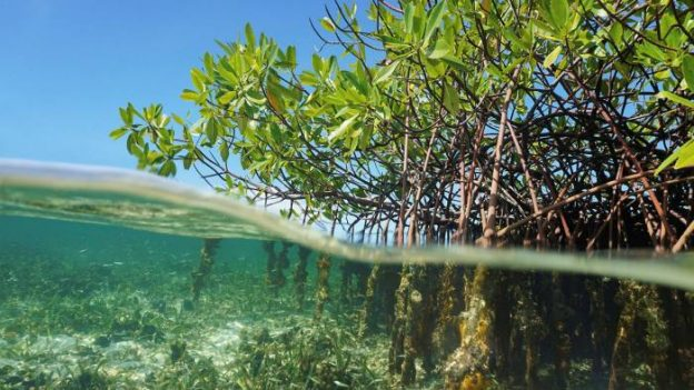 Tech knowhow gives new lease of life to marine habitats